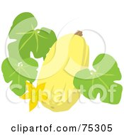 Yellow Squash With Leaves And A Blossom