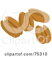 Royalty Free RF Clipart Illustration Of Four Pecan Nuts by Rosie Piter