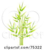 Green Bamboo Cluster Of Fresh New Leaves And Stalks by Oligo