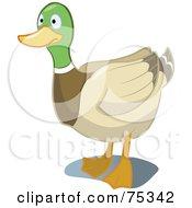 Royalty Free RF Clipart Illustration Of A Mallard Duck Staring