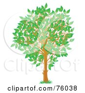 Royalty Free RF Clipart Illustration Of A Young Spring Season Tree With Green Leaves