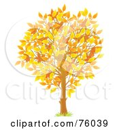 Young Autumn Season Tree With Colorful Leaves