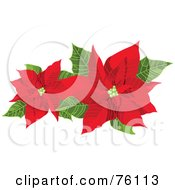 Royalty Free RF Clipart Illustration Of Two Blooming Red Poinsettias And Green Leaves by Pushkin