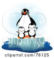 Penguin Family Playing On Floating Ice In The Snow