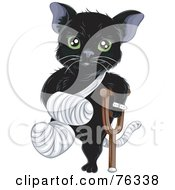 Green Eyed Black Cat With A Bandaged Foot Tail And Arm Using A Crutch