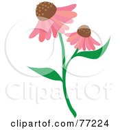 Stem With Two Pink Echinacea Coneflowers