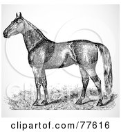 Royalty Free RF Clipart Illustration Of A Black And White Horse Sketch Profile
