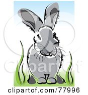 Gray Bunny Rabbit Sitting In Lush Green Grass