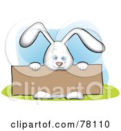 Cute White Bunny Holding A Blank Brown Sign Board