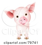 Royalty Free RF Clipart Illustration Of An Adorable Curious Pig With A Cocked Head by Oligo