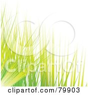 Royalty Free RF Clipart Illustration Of A Background Of Green And Yellow Blades Of Grass