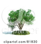 Royalty Free RF Clipart Illustration Of A 3d Realistic Tree In A Circle Of Grass by Mopic