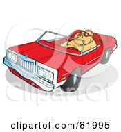 Royalty Free RF Clipart Illustration Of A Fat Guy Driving A Red Convertible Car by Snowy
