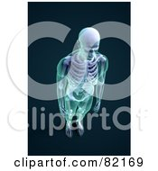 Royalty Free RF Clipart Illustration Of A 3d Male Skeleton With Transparent Skin Aerial View On Dark Blue