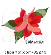 Red Poinsettia Bloom On White With Text