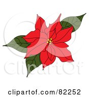 Red Poinsettia Flower With Green Leaves