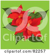 Two Red Poinsettias On Green