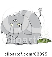 Gray Elephant Grinning After Pooping With Flies