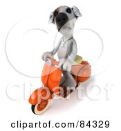 Royalty Free RF Clipart Illustration Of A 3d Jack Russell Terrier Pooch Character On A Scooter
