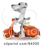 Royalty Free RF Clipart Illustration Of A 3d Jack Russell Terrier Pooch Character Riding A Scooter Facing Left