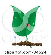 Ladybug On A Dewy Plant On White