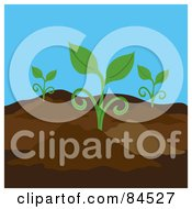 Royalty Free RF Clipart Illustration Of Seedling Plants Growing In A Garden by Pams Clipart