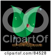 Royalty Free RF Clipart Illustration Of A Ladybug On A Dewy Plant On Black by Pams Clipart