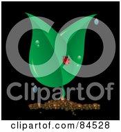 Ladybug On A Dewy Plant On Black