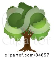 Royalty Free RF Clipart Illustration Of A Mature Oak Tree With Lush Green Foliage