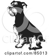 Royalty Free RF Clipart Illustration Of A Black And White Seated Schnauzer Dog by David Rey