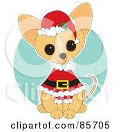 Adorable Santa Chihuahua Puppy