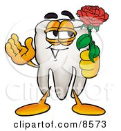 Tooth Mascot Cartoon Character Holding A Red Rose On Valentines Day