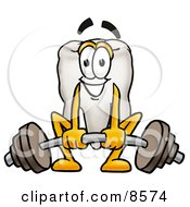 Tooth Mascot Cartoon Character Lifting A Heavy Barbell