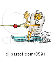Tooth Mascot Cartoon Character Waving While Water Skiing