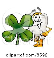 Tooth Mascot Cartoon Character With A Green Four Leaf Clover On St Paddys Or St Patricks Day