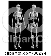 Royalty Free RF Clipart Illustration Of A Front And Rear View Of A 3d Human Skeleton