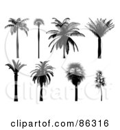 Royalty Free RF Clipart Illustration Of A Digital Collage Of Black Tropical Palm Tree Silhouettes by Mopic
