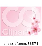 Royalty Free RF Clipart Illustration Of A Pink Background With White Mesh Waves And Cherry Blossoms