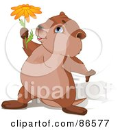 Royalty Free RF Clipart Illustration Of A Cute Groundhog With A Shadow Holding Up A Daisy Flower by Pushkin