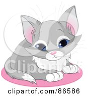 Royalty Free RF Clipart Illustration Of A Cute Blue Eyed Gray Kitten Sitting On A Pink Rug