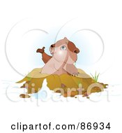 Royalty Free RF Clipart Illustration Of A Cute Groundhog Popping Out Of His Den And Holding His Paw Out by Pushkin