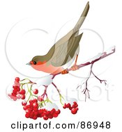 Royalty Free RF Clipart Illustration Of A Robin On A Branch Of Ash Berries And Snow