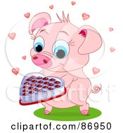 Sweet Pig Holding Out A Box Of Valentine Chocolates