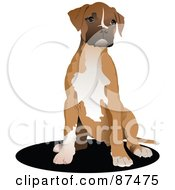 Sitting Boxer Dog Puppy