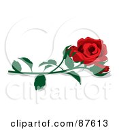 Fully Bloomed Single Red Rose And Bud With A Stem