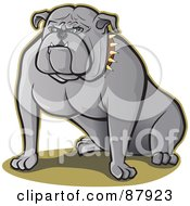 Strong Bull Dog Sitting A Spiked Collar On His Neck