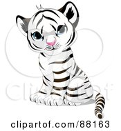 Royalty Free RF Clipart Illustration Of An Adorable Sitting Baby White Tiger Cub With Blue Eyes