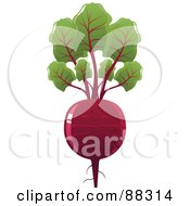 Shiny Red Beet With Leaves