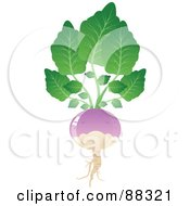 Royalty Free RF Clipart Illustration Of A Shiny Purple Turnip With Gree Leaves