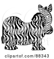 Chubby Zebra Its Body In Profile His Head Looking At The Viewer
